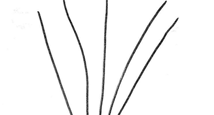 Mâțișori