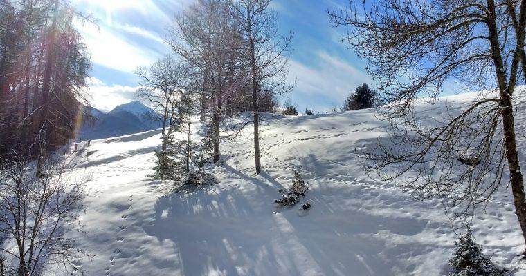 Vanatoarea de urme prin zapada